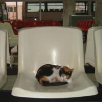 tunisia_airport_cat