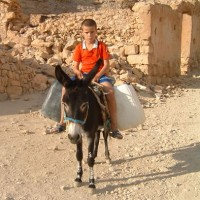 tunisia_boy_donkey